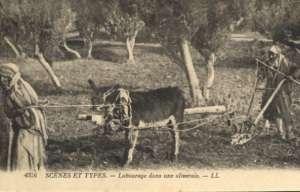 Fotografije - Scenes et types - labourage dans une oliveraie